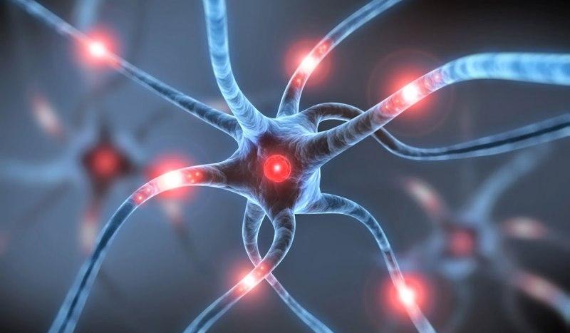 νευρικά κύτταρα
