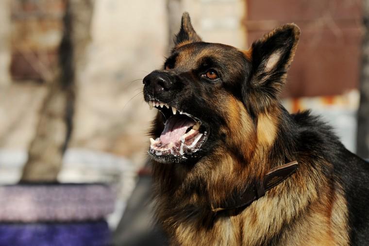 f88a382d2126 Τα τελευταία χρόνια όλο και πιο συχνά ακούμε για περιστατικά με σκύλους που  επιτίθενται σε ανθρώπους και