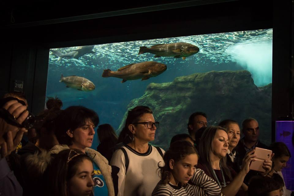 6 θαλάσσια πάρκα και ενυδρεία για να ανακαλύψετε παρέα με τα παιδιά τον πλούτο του βυθού