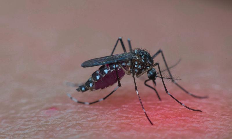 Εξαπλώνεται με γοργούς ρυθμούς ο ιός του Δυτικού Νείλου – Οδηγίες προστασίας από τα κουνούπια