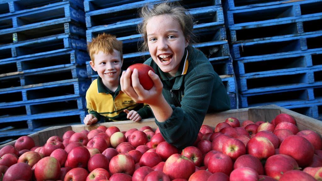 Σε αυτά τα σχολεία θα μοιραστούν δωρεάν φρούτα – Γιατί οι δάσκαλοι καταγγέλουν το πρόγραμμα