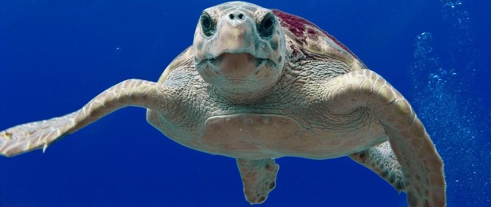 ΠΡΟΣΟΧΗ! Αν κολυμπάτε σε αυτή την παραλία υπάρχει κίνδυνος να δεχθείτε επίθεση από θαλάσσιες χελώνες
