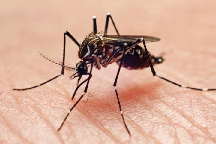 Ιός του Δυτικού Νείλου 2019: 4 νεκροί – Αυτές είναι οι περιοχές που εντοπίζονται τα επικίνδυνα κουνούπια