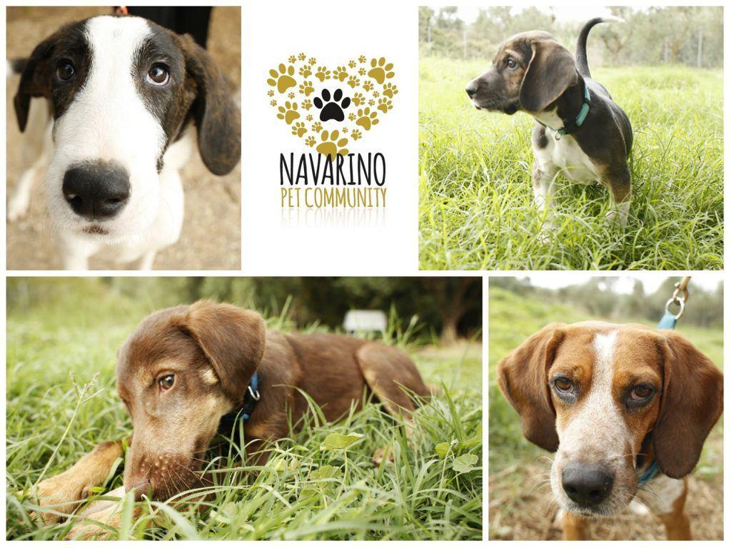 Τhe Westin Resort Costa Navarinο: Ένα σαββατοκύριακο αφιερωμένο στην αγάπη μας για τα σκυλάκια! (27-29/9)