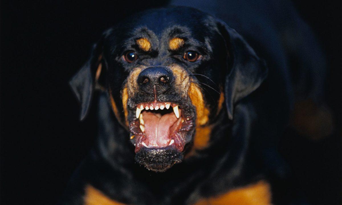 Είδηση – σοκ: Νεκρό 3 μηνών βρέφος μετά από επίθεση σκύλου