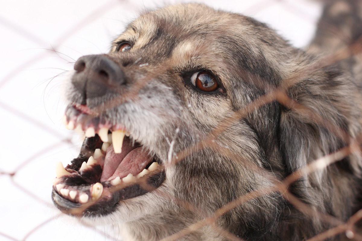 Σέρρες: Σε κρίσιμη κατάσταση 9χρονος που δέχθηκε επίθεση από σκυλιά, επιστρέφοντας από το σχολείο