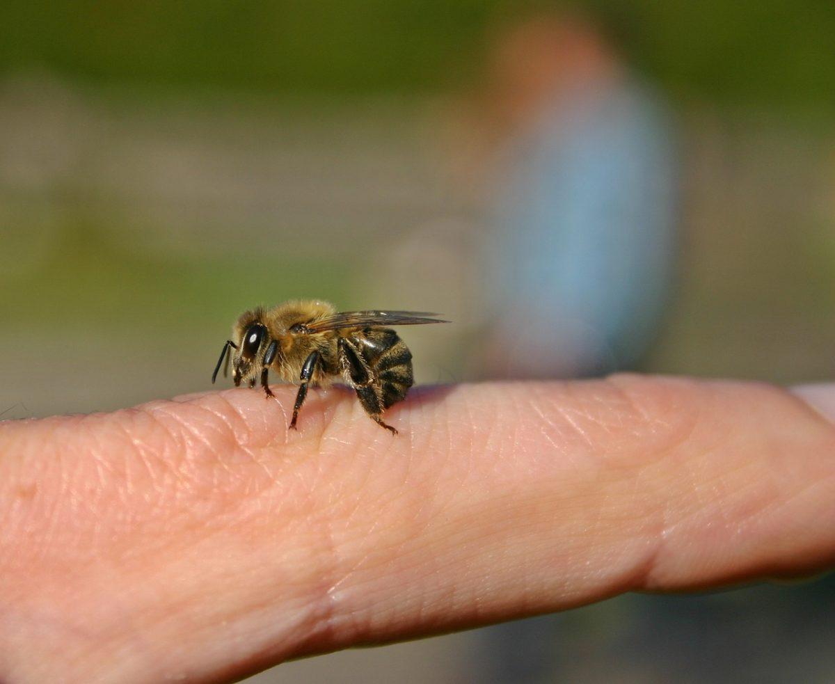 Τι να κάνω αν τσιμπήσει το παιδί μου μέλισσα; Η παιδίατρος απαντά