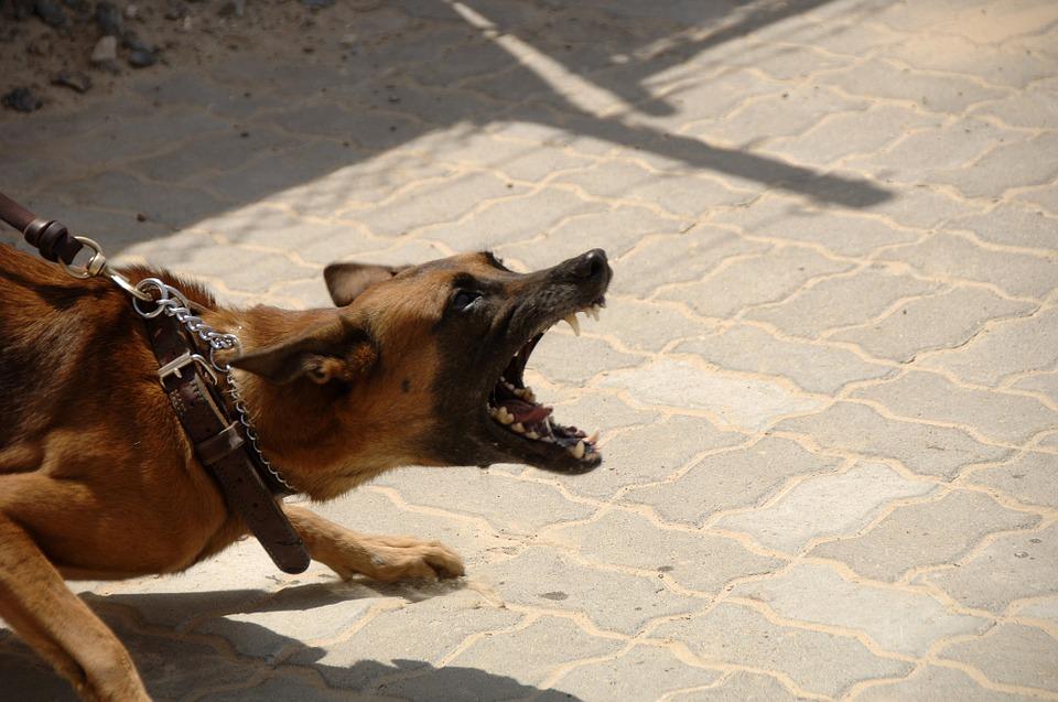 Άγρια επίθεση σκύλων σε κοριτσάκι – Έκκληση να βρεθεί ο ιδιοκτήτης