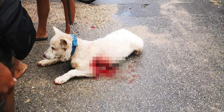 Νίκαια: Αμετανόητος ο καθηγητής που μαχαίρωσε τον σκύλο – Άγρια επίθεση από τον κόσμο