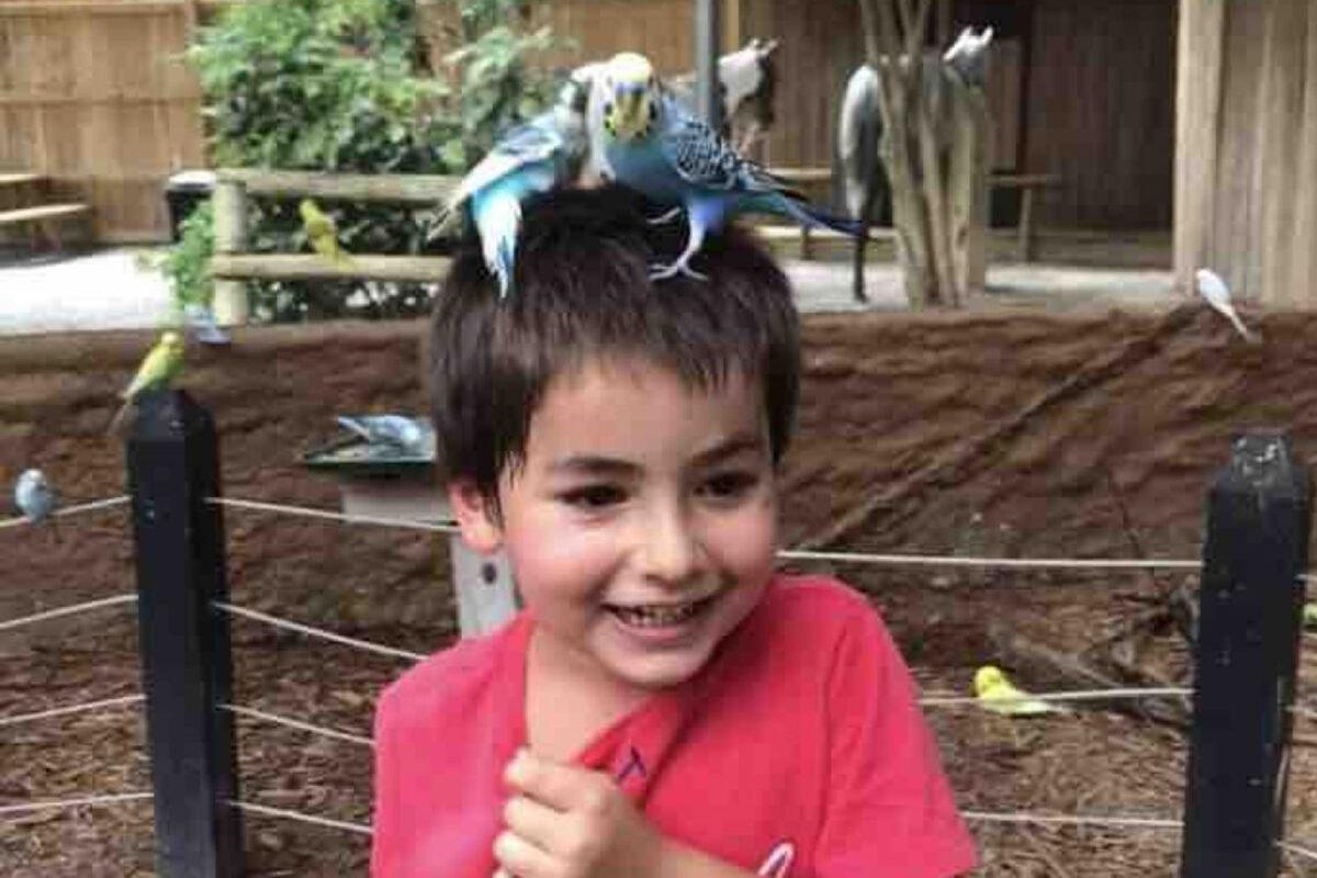 Φρικιαστική επίθεση πίτμπουλ σε 6χρονο παιδί – To σκυλί εγκαταλείφθηκε από τον ιδιοκτήτη του στη γειτονιά του παιδιού