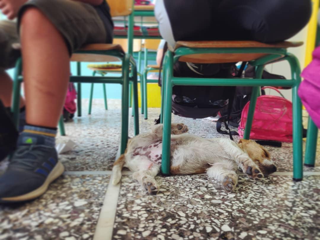 Δασκάλα-υπόδειγμα: Φιλοξένησε μια αδέσποτη σκυλίτσα στην τάξη και δίδαξε έμπρακτα στους μαθητές τη φιλοζωία