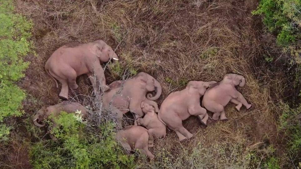 Η viral φωτογραφία της ημέρας: Μια οικογένεια ελεφάντων απολαμβάνει τον ύπνο της έπειτα από καταστροφικές επιδρομές