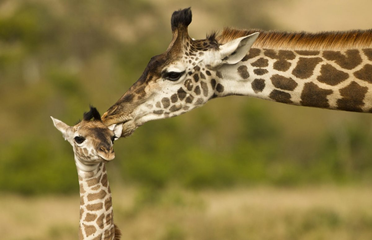 """""""Γιατί οι μαμάδες φιλάνε τα μωρά τους;"""": Δεν είναι μόνο από αγάπη – υπάρχει και ανοσολογική εξήγηση…"""