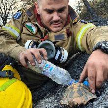 Αχαΐα: H φωτογραφία του πυροσβέστη που δίνει νερό σε χελώνα μετά τη φωτιά είναι ό,τι ωραιότερο είδαμε σήμερα