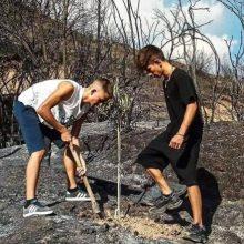 Η ωραιότερη εικόνα των τελευταίων ημερών: Το πρώτο δέντρο στα καμένα από δύο 15χρονους