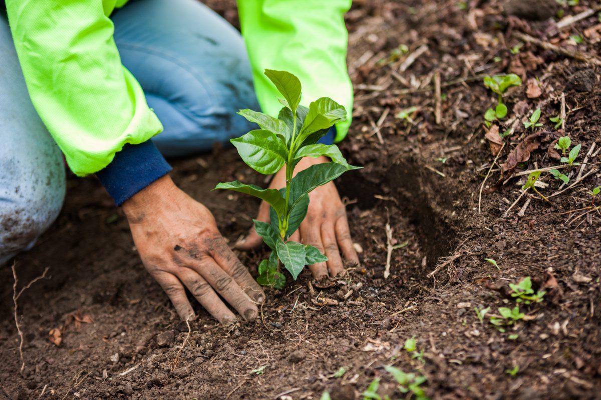 Η Nestlé σχεδιάζει να στηρίξει και να επιταχύνει τη μετάβαση σε ένα αναγεννητικό σύστημα τροφίμων – ένα σύστημα που αποσκοπεί στην προστασία και την αποκατάσταση του περιβάλλοντος, στη βελτίωση των μέσων διαβίωσης των αγροτών και στην ενίσχυση της ευημερίας των γεωργικών κοινοτήτων.