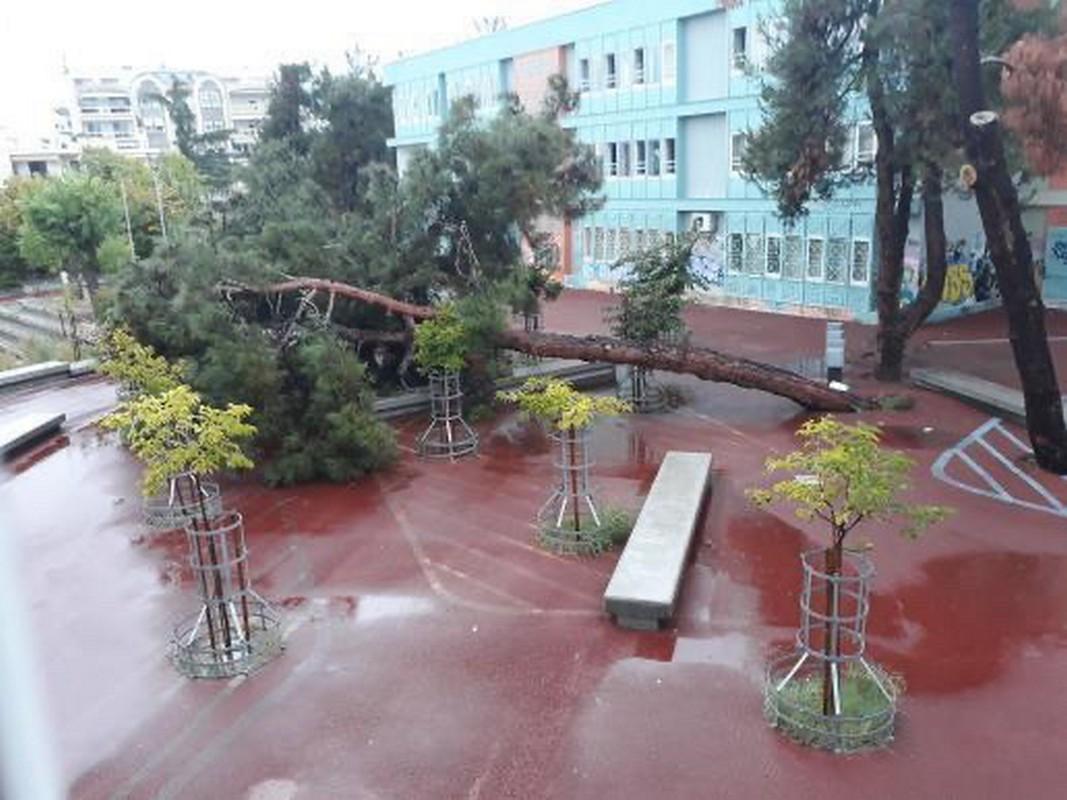 Κακοκαιρία Μπάλλος: Τεράστιο δέντρο έπεσε σε αυλή σχολείου στη Θεσσαλονίκη - Εικόνες κόβουν την ανάσα