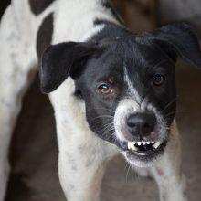 Θεσσαλονίκη: Επίθεση σκύλου σε 4χρονη - Την δάγκωσε στο πρόσωπο